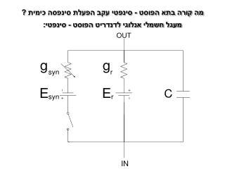 מעגל חשמלי אנלוגי לדנדריט הפוסט - סינפטי: