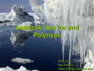 Antarctic Sea Ice and  Polynyas