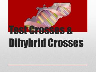 Test Crosses &  Dihybrid  Crosses