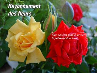 Rayonnement des fleurs