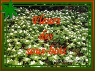 Fleurs des sous-bois