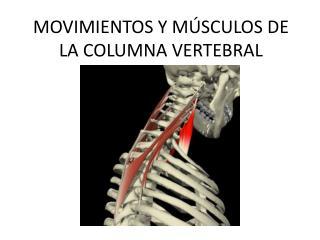 MOVIMIENTOS Y M SCULOS DE LA COLUMNA VERTEBRAL