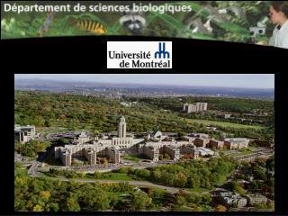 L'Université de Montréal est (incluant HEC Montréal et l'École Polytechnique)