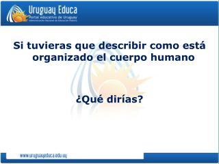 Si tuvieras que describir como est  organizado el cuerpo humano     Qu  dir as