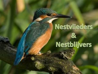 Nestvlieders & Nestblijvers