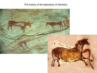Pre-history of the laboratory of Genetics