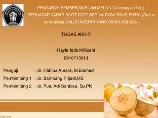 PENGARUH PEMBERIAN BUAH MELON ( Cucumis melo L .)