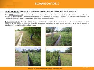 BLOQUE CASTOR C