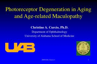 Photoreceptor Degeneration in Aging and Age-related Maculopathy