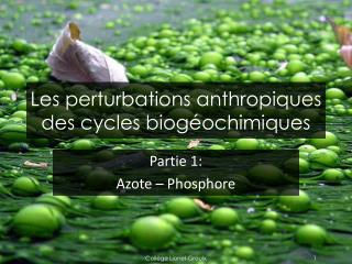 Les perturbations anthropiques des cycles biog�ochimiques