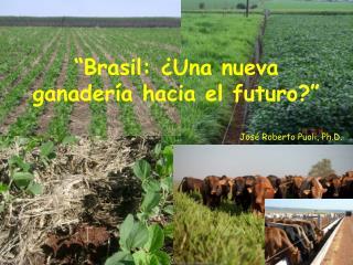 """""""Brasil: ¿Una nueva ganadería hacia el futuro?"""""""