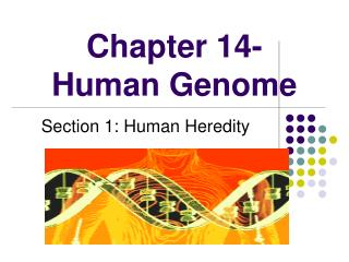 Chapter 14- Human Genome