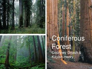 Coniferous Forest Courtney Gnash & Kaylah Henry