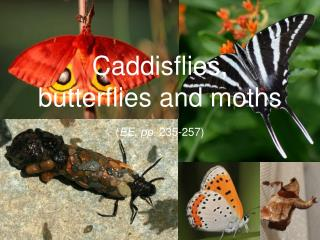 Caddisflies, butterflies and moths