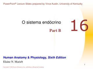 O sistema endócrino Part B