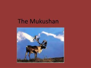 The Mukushan
