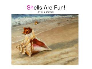 Sh ells Are Fun! By Inji El Ghannam