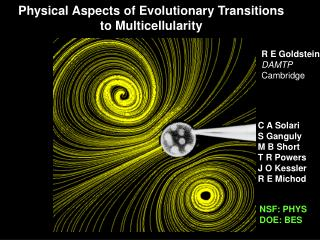 Physical Aspects of Evolutionary Transitions to Multicellularity