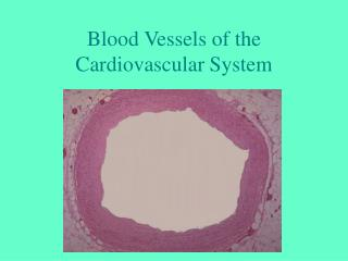 Blood Vessels of the Cardiovascular System