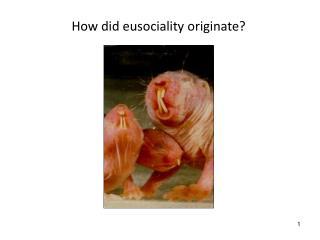 How did eusociality originate