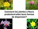 Comment les plantes   fleurs produisent-elles leurs formes de dispersion