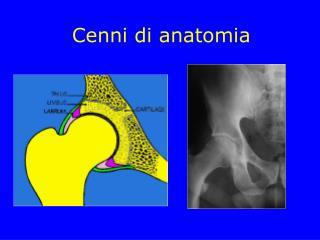 Cenni di anatomia