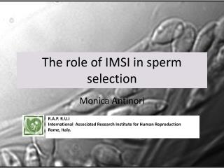 The role of IMSI in sperm selection
