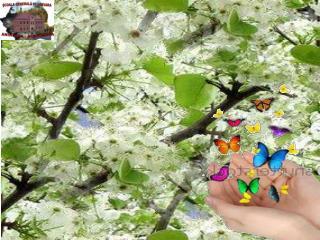 """"""" Prin pomi e ciripit şi cânt Văzduhu-i plin de-un roşu soare Şi sălciile-n albă floare"""