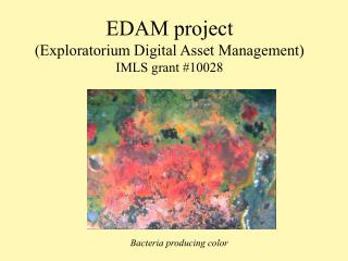 EDAM project (Exploratorium Digital Asset Management) IMLS grant #10028