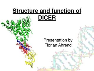 Structure and function of DICER