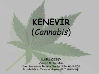 KENEVİR ( Cannabis ) Ü.Ülkü ÖZBEY Ziraat Mühendisi Koordinasyon ve Tarımsal Veriler Şube Müdürlüğü