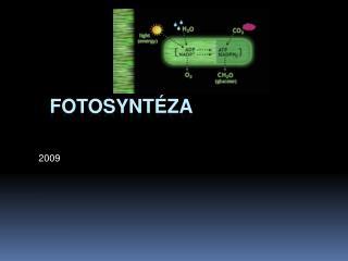 Fotosynt za