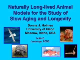 Naturally Long-lived Animal Models for the Study of  Slow Aging and Longevity Donna J. Holmes