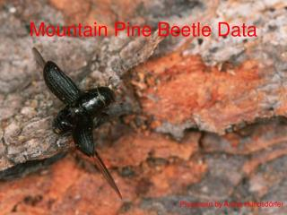 Mountain Pine Beetle Data