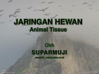 JARINGAN HEWAN Animal Tissue