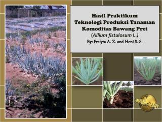 Hasil Praktikum  Teknologi Produksi Tanaman Komoditas  Bawang Prei
