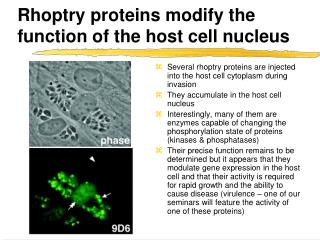 Rhoptry proteins modify the function of the host cell nucleus