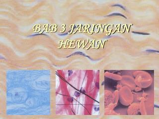 BAB 3 JARINGAN HEWAN