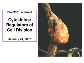 Biol 352  Lecture 6 Cytokinins: Regulators of Cell Division January 24, 2007