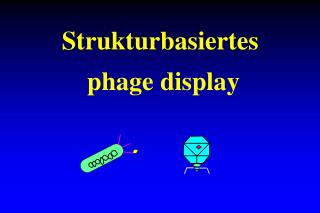 Strukturbasiertes  phage display
