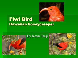 I'iwi Bird Hawaiian honeycreeper