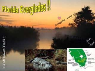 Florida Everglades !!