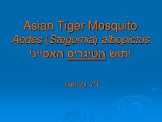 Asian Tiger Mosquito Aedes  ( Stegomia )  albopictus יתוש  הטיגריס  האסייני