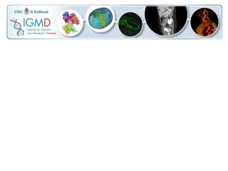 IGMD Powerpoint Template