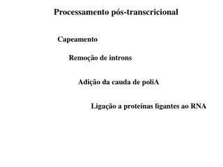 Processamento pós-transcricional