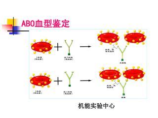 ABO 血型鉴定