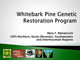 Whitebark Pine Genetic Restoration Program