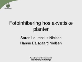 Fotoinhibering hos akvatiske planter