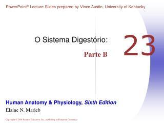 O Sistema Digestório: Parte B