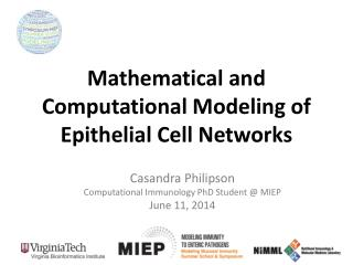 Mathematical and Computational Modeling of Epithelial Cell Networks